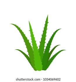 Aloe Vera Vector Illustration. Aloe icon. Aloe Plant.