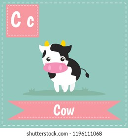 alphabet C letter flashcard Cow for kids learning English vocabulary. Cute children ABC animal zoo. Instruction media Vector illustration.