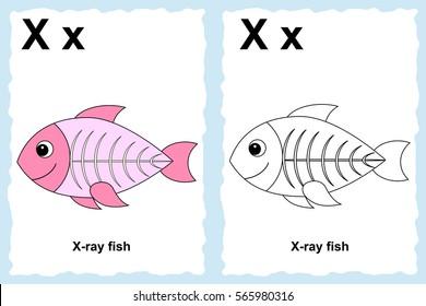 Cute X ray Fish Cartoon Images Stock Photos Vectors Shutterstock