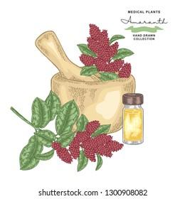 Amaranth flowers and leaves. Medical plants set. Vector illustration hand drawn.