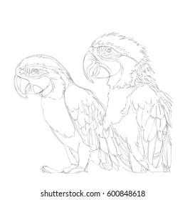 amazing parrots line art continuous line drawing