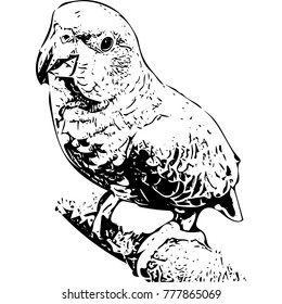 Amazon parrot sitting there (illustration)
