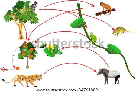 Balance In Nature Food Chain