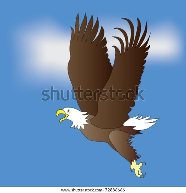 American Bald Ealge in flight.