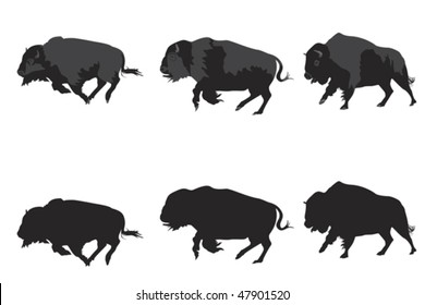 American bison galloping