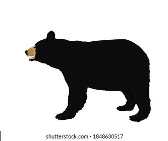 American Black bear vector illustration isolated on white background.