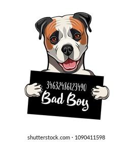American bulldog bad boy. Dog criminal. Arrest photo. Police records. Ameciran bulldog prison. Police mugshot background. Vector illustration.