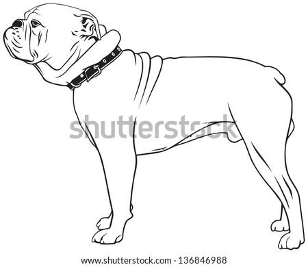 American Bulldog Dog Breed Vector Illustration Stock Vector Royalty