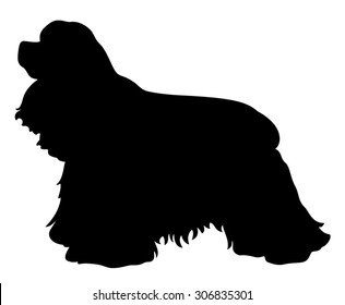 American Cocker Spaniel purebred dog standing in side view - black vector silhouette isolated on white