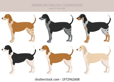 American englisn coonhound all colours clipart. Different coat colors set.  Vector illustration