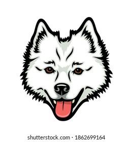 American Eskimo dog - isolated vector illustration