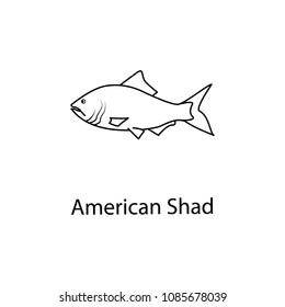 american shad icon. Element of marine life for mobile concept and web apps. Thin line american shad icon can be used for web and mobile. Premium icon on white background