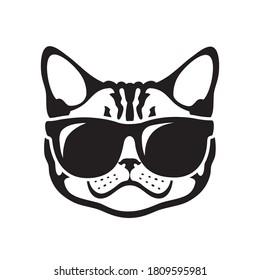 American shorthair cat wearing sunglasses or Silver Tabby cat
