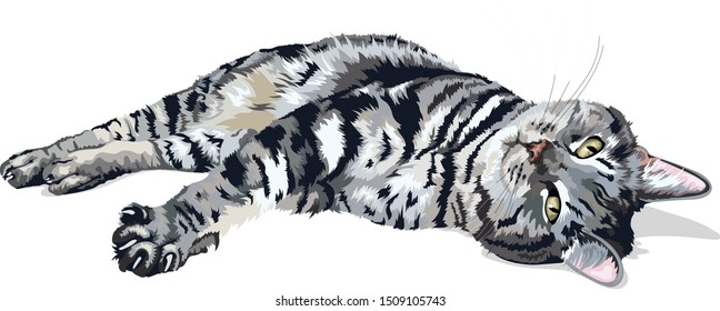 American Shorthair Domestic Cat Lying On Side With Paw Stretched Out Vector