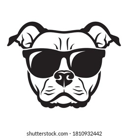 American Staffordshire bull Terrier dog wearing red sunglasses isolated vector illustration
