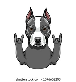 American Staffordshire Terrier. Rock gesture, Horns. Dog portrait. Staffordshire Terrier breed. Vector illustration.