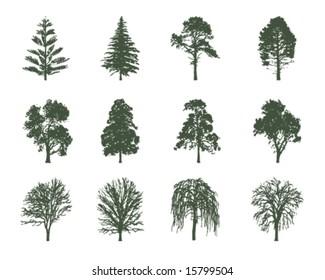 American trees vector illustration
