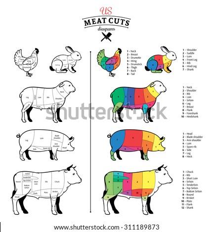 American Us Cuts Beef Pork Lamb Stock Vector Royalty Free