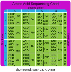 Amino Acid Sequence chart