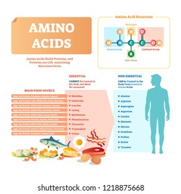 Amino acids vector illustration. List with food and its essential acids. Healthy and well balanced nutrition meal to get necessary chemical elements like histidine, lysing, valine, leucine and others.