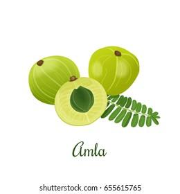 Amla fruit or Indian gooseberry, Malacca tree, or amalika. Vector illustration isolated on white .Used in medicine, culinary, cosmetics
