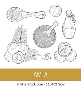 Amla. Plant. Fruit, leaf. Bottle, powder, spoon. Sketch. Set.