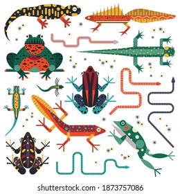 Amphibian cold-blood animal set. Flat design collection of freshwater aquatic ecosystem amphibian species. Such as frogs, toads, salamanders, newts, and tropical caecilians.