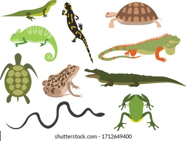 Сollection of amphibious animals- vector illustration.