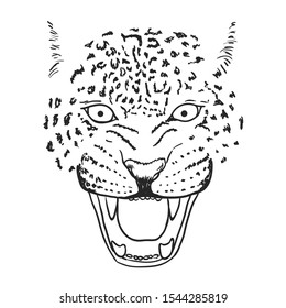 Amur Leopard Roar face or head. Hand drawn Leopard Head animal or predator isolated on white background. Vector illustration
