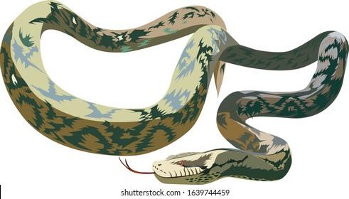 Anaconda vector - Giant anaconda vector - Giant Snake vector
