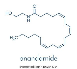 Anandamide endogenous cannabinoid neurotransmitter molecule. Skeletal formula.