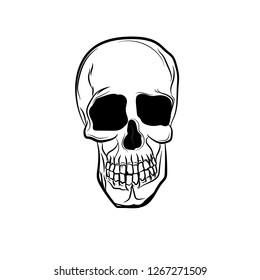 d03cbdf3dfac Anatomic Skull Vector Art. Detailed hand-drawn illustration of skull.  Grunge weathered illustration