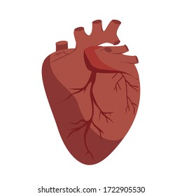Anatomical Heart vector. Flat Graphic illustration, human body organ.