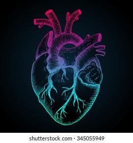 Human Heart Abstract Photos 106 129 Human Heart Stock