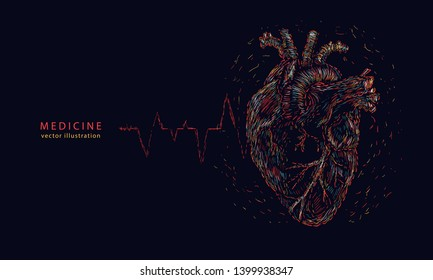 Anatomical human heart and pulse line. Medicine background