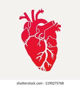 Imágenes, fotos de stock y vectores sobre Corazón Real