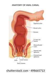 rabbit-anus-hemorrhoid
