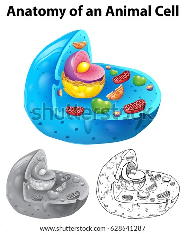 Anatomy Animal Cell Three Different Drawing Stock Vector Royalty