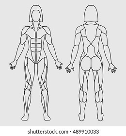 Anatomy of female muscular system on a white background. Human muscles guide. Front view, back view.