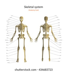 Axial Skeleton Images, Stock Photos & Vectors | Shutterstock
