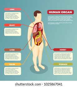 Organs Human Body Images, Stock Photos & Vectors | Shutterstock