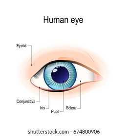Anatomy of the human eye in front view. External View. Schematic diagram. detailed illustration