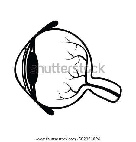 Anatomy Human Eye Sectional View Side Stock Vector Royalty Free