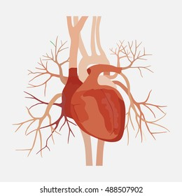 anatomy of the human heart, heart, medical science, the atria and ventricles, aorta, valve and vein, education anoatomy, internal organs, flat design,