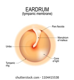 Anatomy of the humans eardrum. tympanic membrane. myringa. Vector illustration for medical, science, and educational use