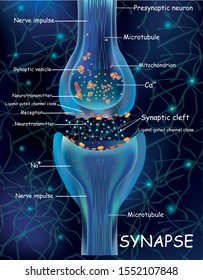 Anatomy synapse cells. Transmission signal of impulse in a living organism. Signaling in the brain. Synapse connections in the brain form thoughts, concept learning. Structure synapse for educational