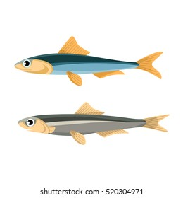 Anchovy fish vector illustration in blue and grey colors. Small, salt-water forage fish of family Engraulidae. Peruvian anchoveta. Oily fish. Tasty food. Seafood healthy meal. Californian anchovy.