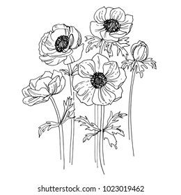Anemone drawn by a black line on a white background. Vector sketch of a flower