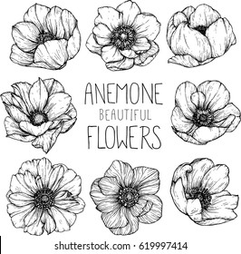 Flower drawing images stock photos vectors shutterstock anemone flowers drawing illustration vector and clip art thecheapjerseys Choice Image