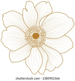 Anemone flowers drawing vector illustration and line art.Hand Drawn Floral Elements for Design, EPS10 Vector background.